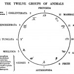 twelve-groups-of-animals