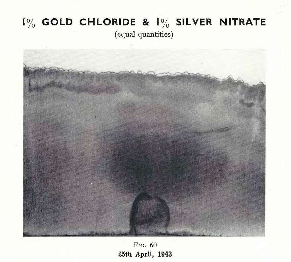 Plate 32, Fig. 60, 1% Gold chloride and 1% Silver nitrate