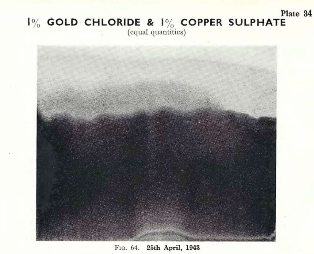 Plate 34, Fig. 64, 1% Gold chloride and 1% Copper sulphate, equal quantities mixed